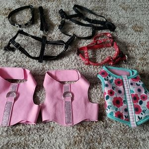 Small dog collar & harness